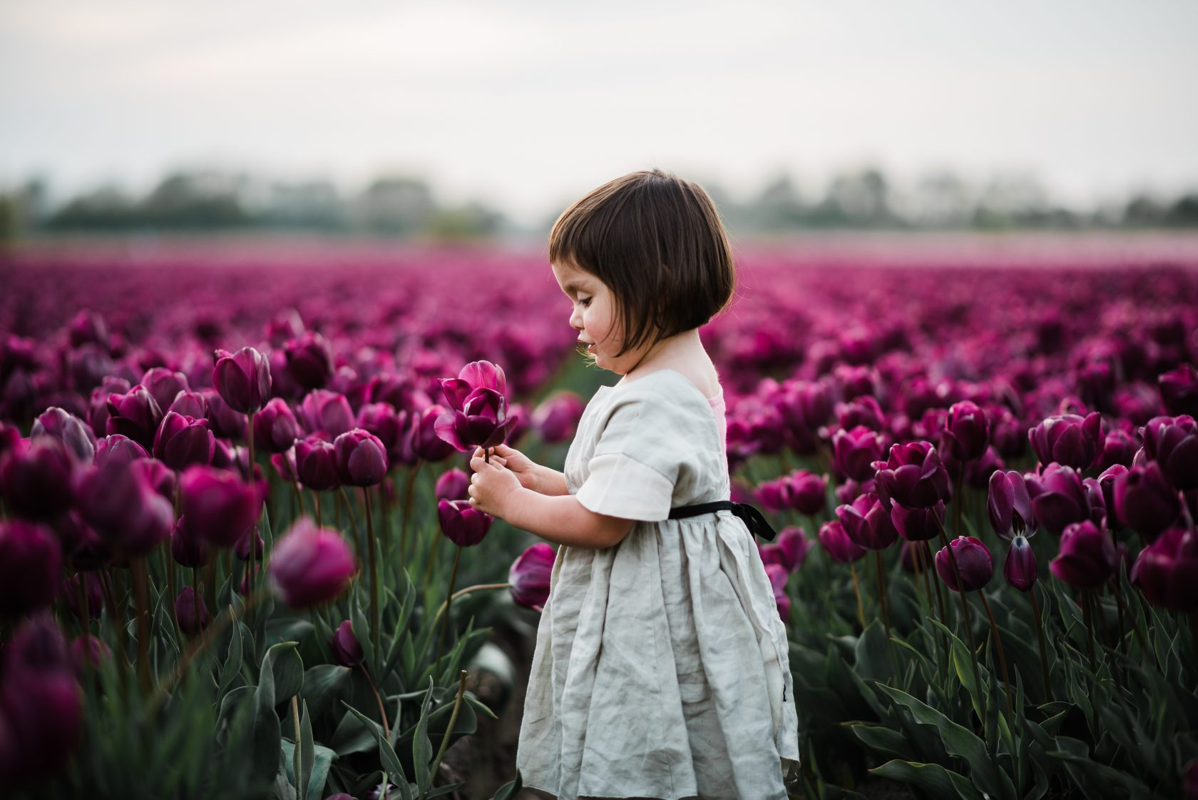 Amsterdam Keukenhof - tulips Photographer 2